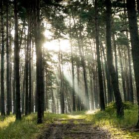 Paprsky lesa