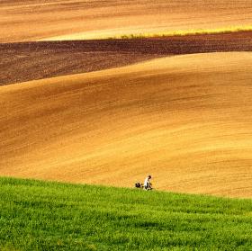 Cestou v polích