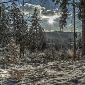 Poklidný les