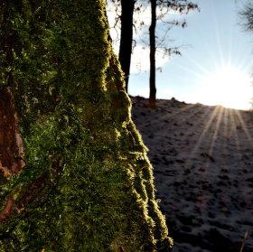 Slunečný zimní den