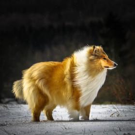 Pes ve větru
