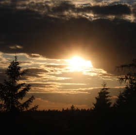 Západ slunce nad lesem