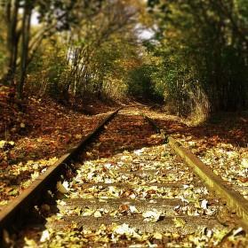 Podzimní kolej