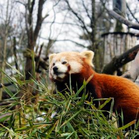Spokojená Panda