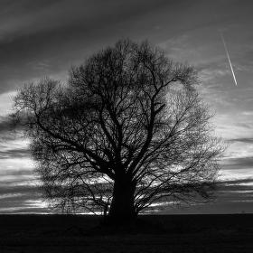 černobílá příroda 1