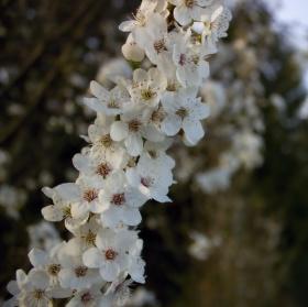 Jarní záře nad Brnem