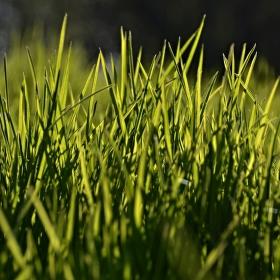 ..v trávě podruhé..