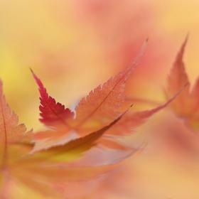 Podzimní časy II.