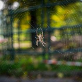 Pán pavučin.....