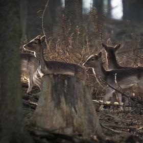 V přítmí lesa
