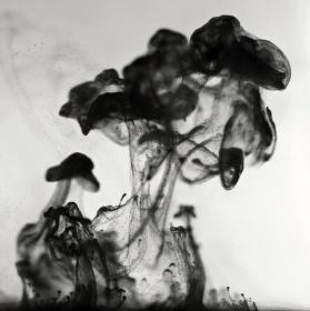 Strom a houba