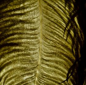 Kovová struktura peří