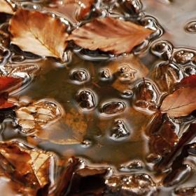 podzimní  malba na vodu