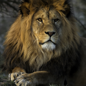 Zamyšlený pohled plzeňského lva při odcházení slunečních paprsků