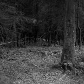 Můj oblíbený les...