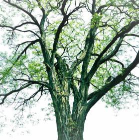 Strom s duší
