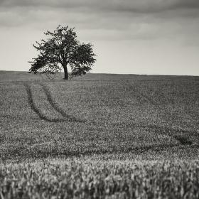 Koleje a strom..