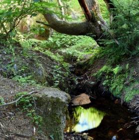 Potůček v lese