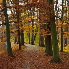 Podzimní barvy z Konopiště