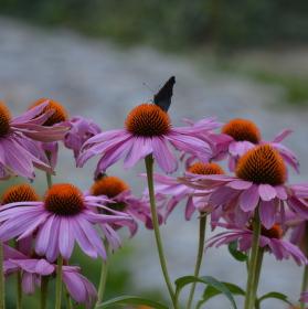 Kytky s motýlem