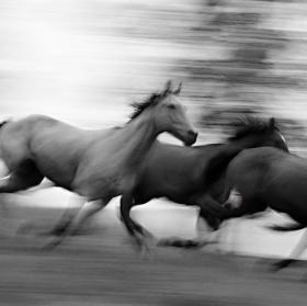 ...já viděl divoký koně...