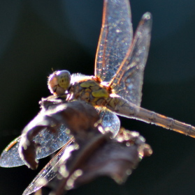 krásný hmyz