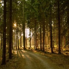 Lesní světlohra
