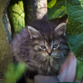 Kočička :)
