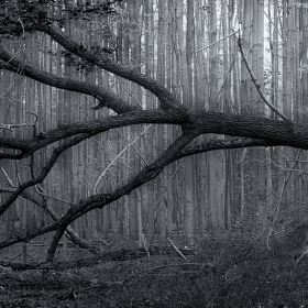 Lužní les XXIX - Přírodní rezervace Polanský les