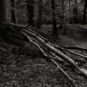Lužní les XXX - Přírodní rezervace Polanský les