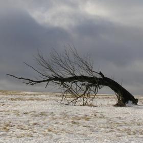 Severní vítr je krutý