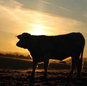 Ráno na pastvině