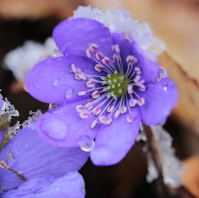 Studené jaro