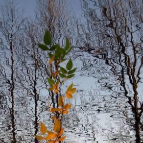 Podzimní hladina