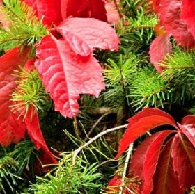 Podzim skoro vánoční