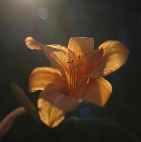 ve světle léta