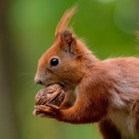 Chci hodně Ořechů