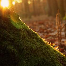 Slunce ulehá do mechové postýlky