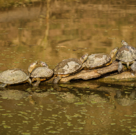 ..želví slunění po bahenní lázni :-)