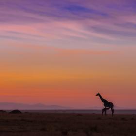 Dobré ráno Masai Maro 19