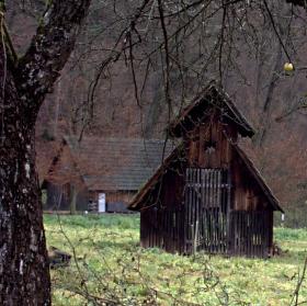 Prastaré jabloně pod hradem Pernštejnem