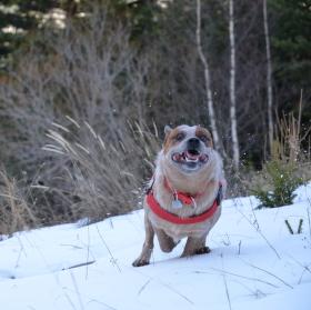 Hurá sníh!