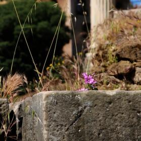 Květ a kámen