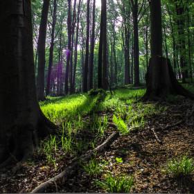 Návštěva v lese