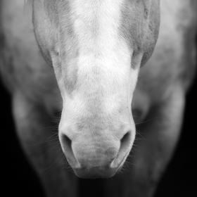 Ospalý kůň