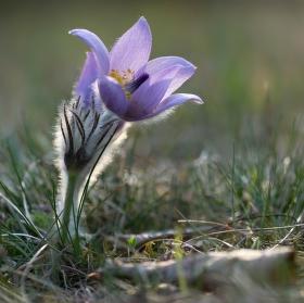 vítej jaro