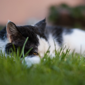 Odpočinek v trávě
