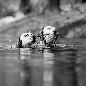 jarni plavani