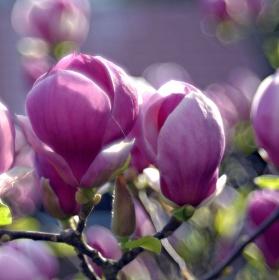 Keď kvety ovládnu jar