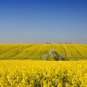 Modro-žltá krajinka
